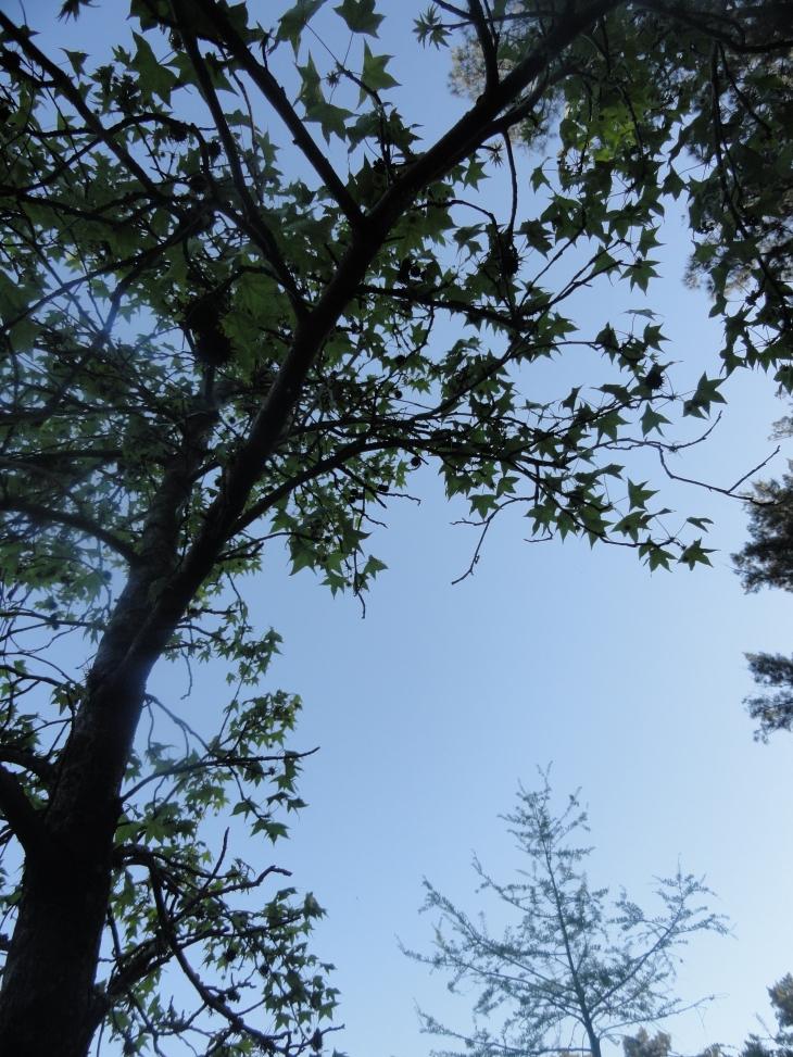 oración al árbol (2)