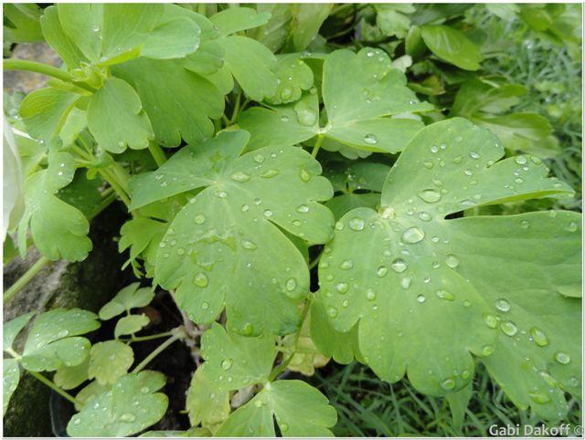 lluvia de primavera