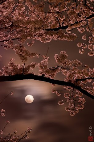 Moon light sakura!!