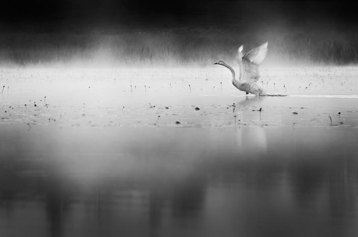 Vuelo Nocturno by MikkoLagerstedt-II- (1)