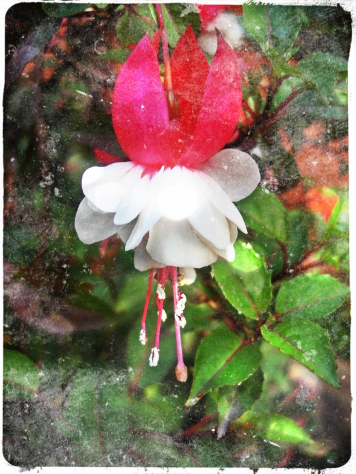 flores que bailan