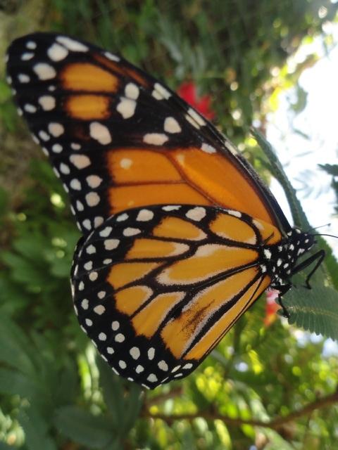 la infamia de las mariposas