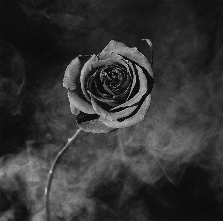 Robert Mapplethorpe, Rose with smoke, 1985