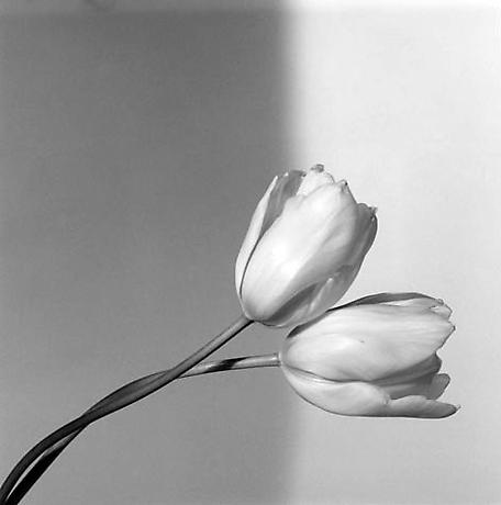 ROBERT MAPPLETHORPE-