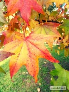 .resumen en otoño