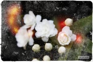 .cartas desconocidas de Julio Cortázar-El Jazz y la Poética