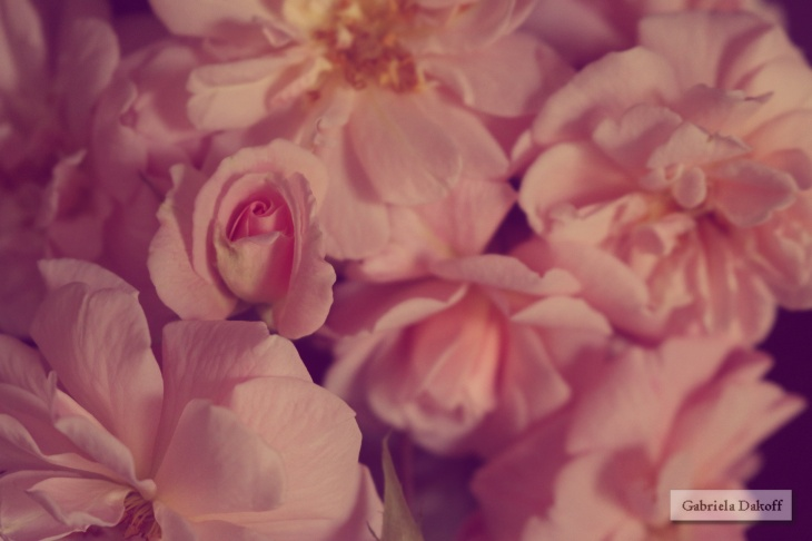 .aroma eterno