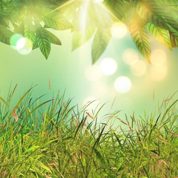 hojas-3d-y-fondo-de-hierba_1048-7758