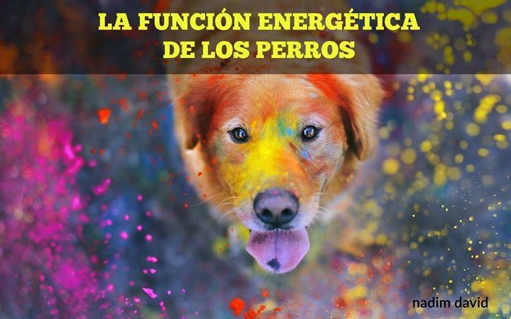 la función energética de los perros