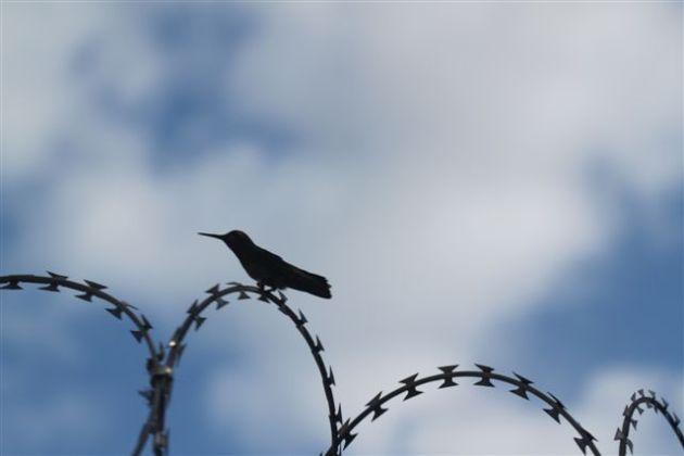 un-colibri