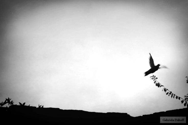 la cofradía de los pájaros