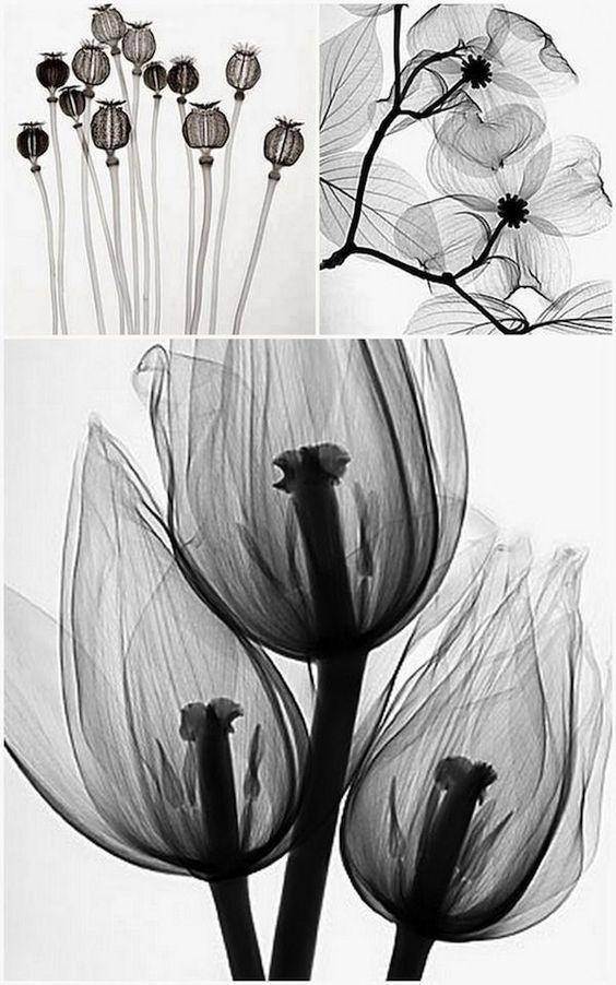 Radiografías de flores y plantas de Steven N. Meyers.jpg
