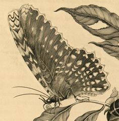 9b81e8933ccf76a79789f85cb21e9005--nature-illustration-animal-illustrations