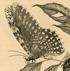 9b81e8933ccf76a79789f85cb21e9005--nature-illustration-animal-illustrations