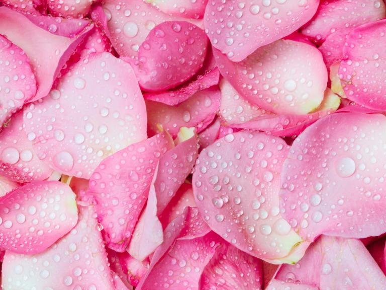 1706w-Getty-Pink-Rose-Petal-Pinkomelet.jpg