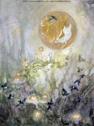 magpies moon gazing