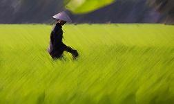 navegando-por-el-mekong-en-vietnam