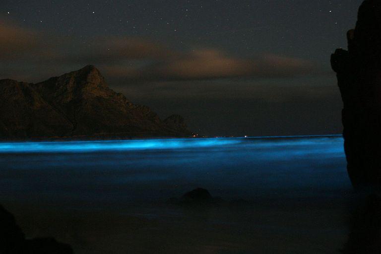 1024px-Blue_Tide-_Noctiluca.jpeg