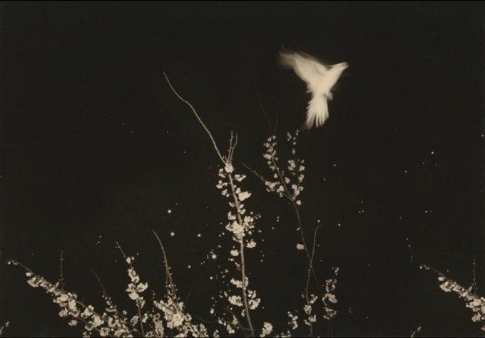 Masao Yamamoto.jpg