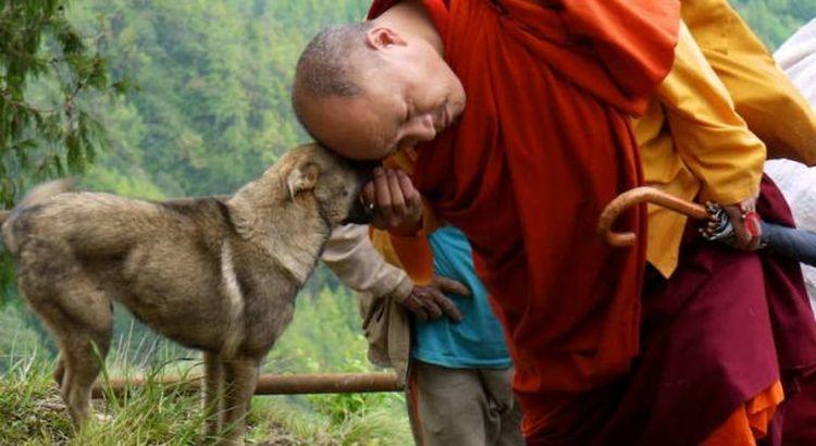 monk dog.jpg