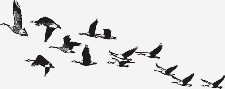 Fish-Canada-geese.jpg