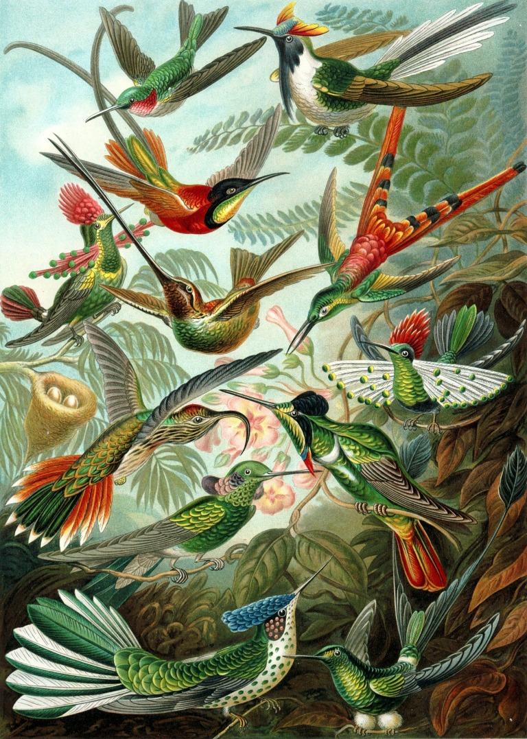 hummingbirds-63107_1920.jpg