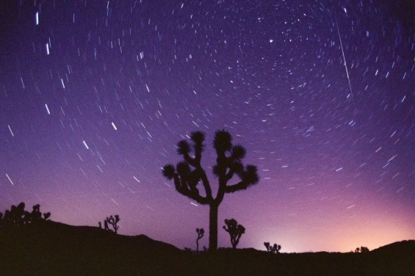 A Perseid meteor over Joshua Tree National Park