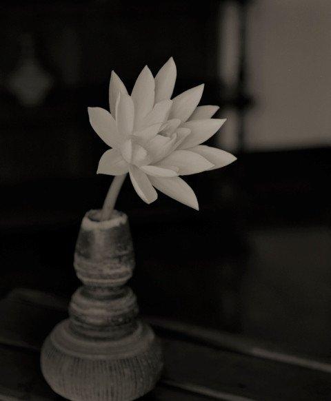 Kenro Izu Fleur