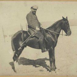 matisse horse