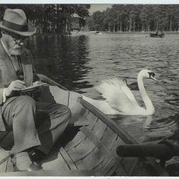 matisse swan
